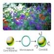 Fragrance Micro Capsule M/ B